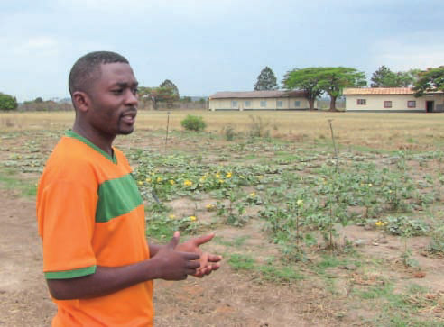 Program manager for the TTC program in Zambia