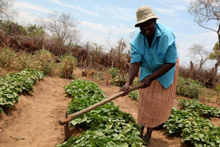 Agriculture Training in Zimbabwe